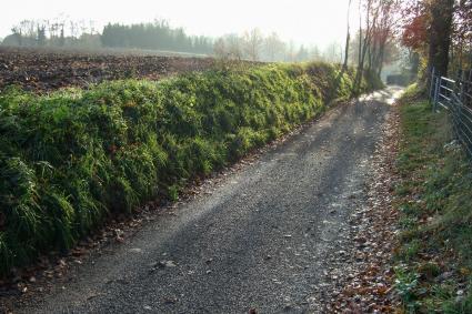 Beekerveld, een holle weg bij Beek. Limburgse lössgebied, AMK terrein 68D-043, Neolithische nederz © Rijksdienst voor het Cultureel Erfgoed