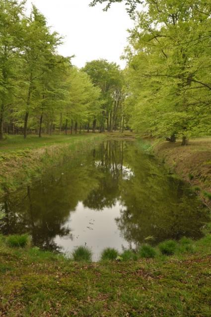 Leybeek te Leyduin © B. van Veen