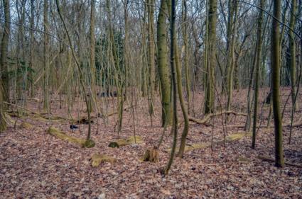 Eekschillersbos landgoederen Leyduin, Woestduin en Vinkenduin.  © B. van Veen