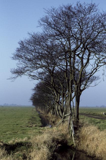 Kenmerkende elzensingelin de Friese Wouden © Landschapsbeheer Nederland