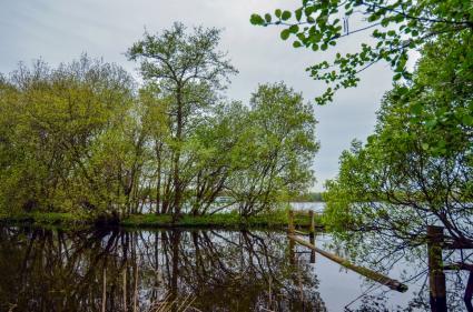 Landscheiding tussen het Nieuwe Meer en de Zuidelijke Oeverlanden, Amsterdamse Bos © B. van Veen