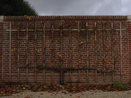 Leifruit bij paleis 't Loo © Paul Minkjan, Landschapsbeheer Nederland