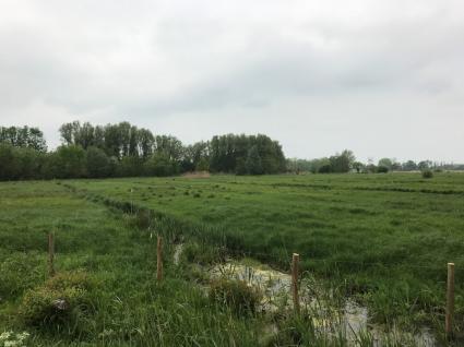 Meersenlandschap in de Bourgoyen Ossemeersen bij Gent Vlaanderen. © B. van Veen