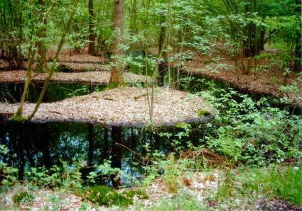 Rabatten in Velders Bosch bij Boxtel, met de greppels vol water