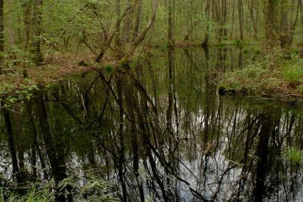 Ticheldobbe (put) gelegen in de Kleibosch in Foxwolde, Drenthe. De ticheldobbe is een restant van een voormalig tichelwerk. © E. Houting