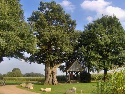 Kroezeboom op de Fleringer es, nabij Fleringen (Overijssel) © Trurbantia